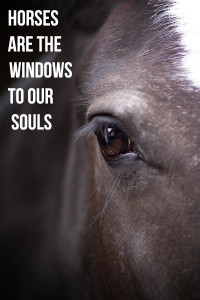 19-horses-windows-soul
